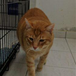 Garfield Front Profile